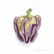 """Angela Faustina, Purple Holland bell pepper study, 2016. Watercolor on paper, 6"""" by 6""""."""