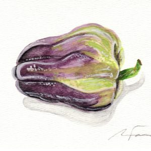 "Angela Faustina, Purple Holland bell pepper study, 2016. Watercolor on paper, 7"" by 5""."