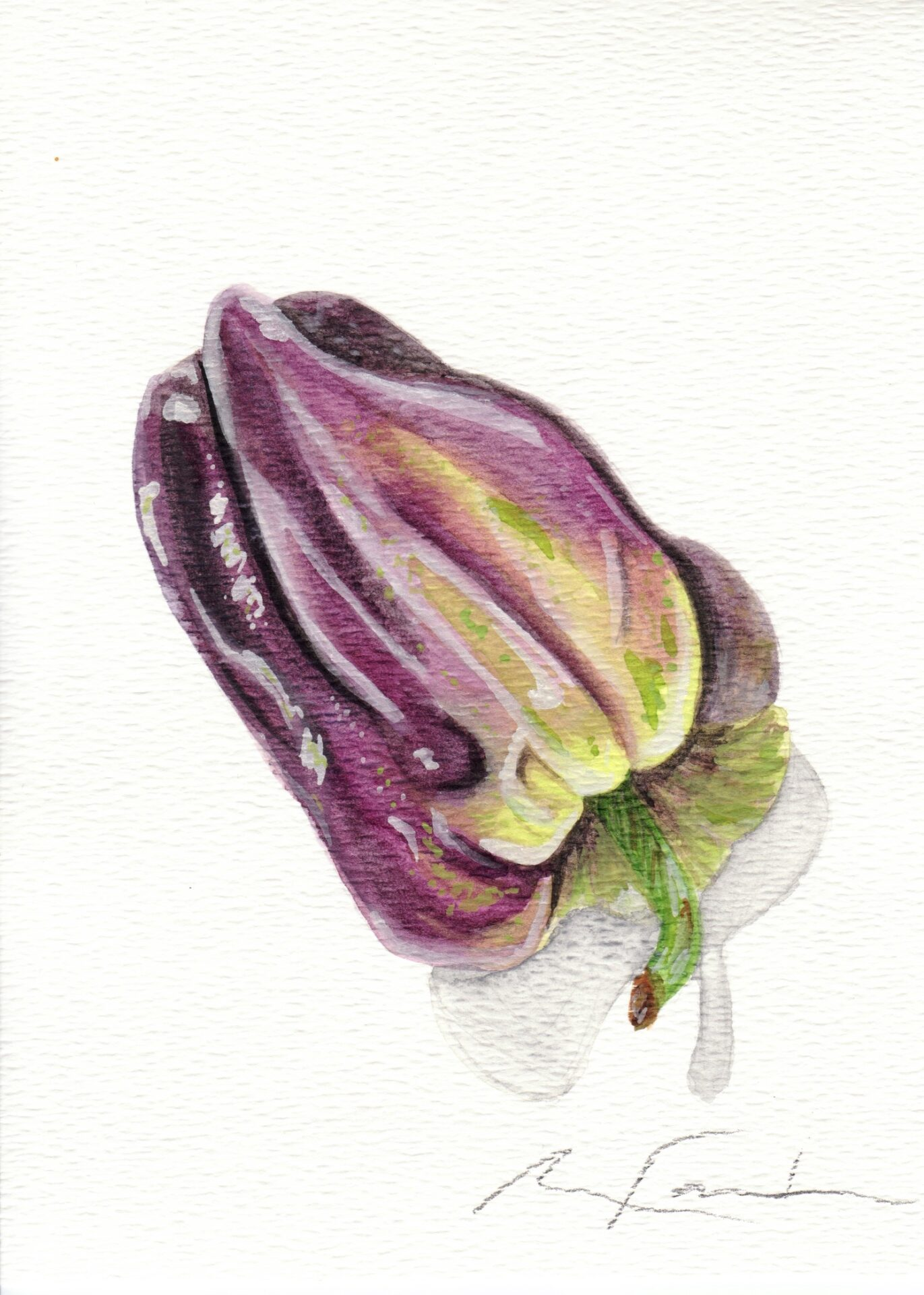 "Angela Faustina, Purple Holland bell pepper study, 2016. Watercolor on paper, 5"" by 7""."