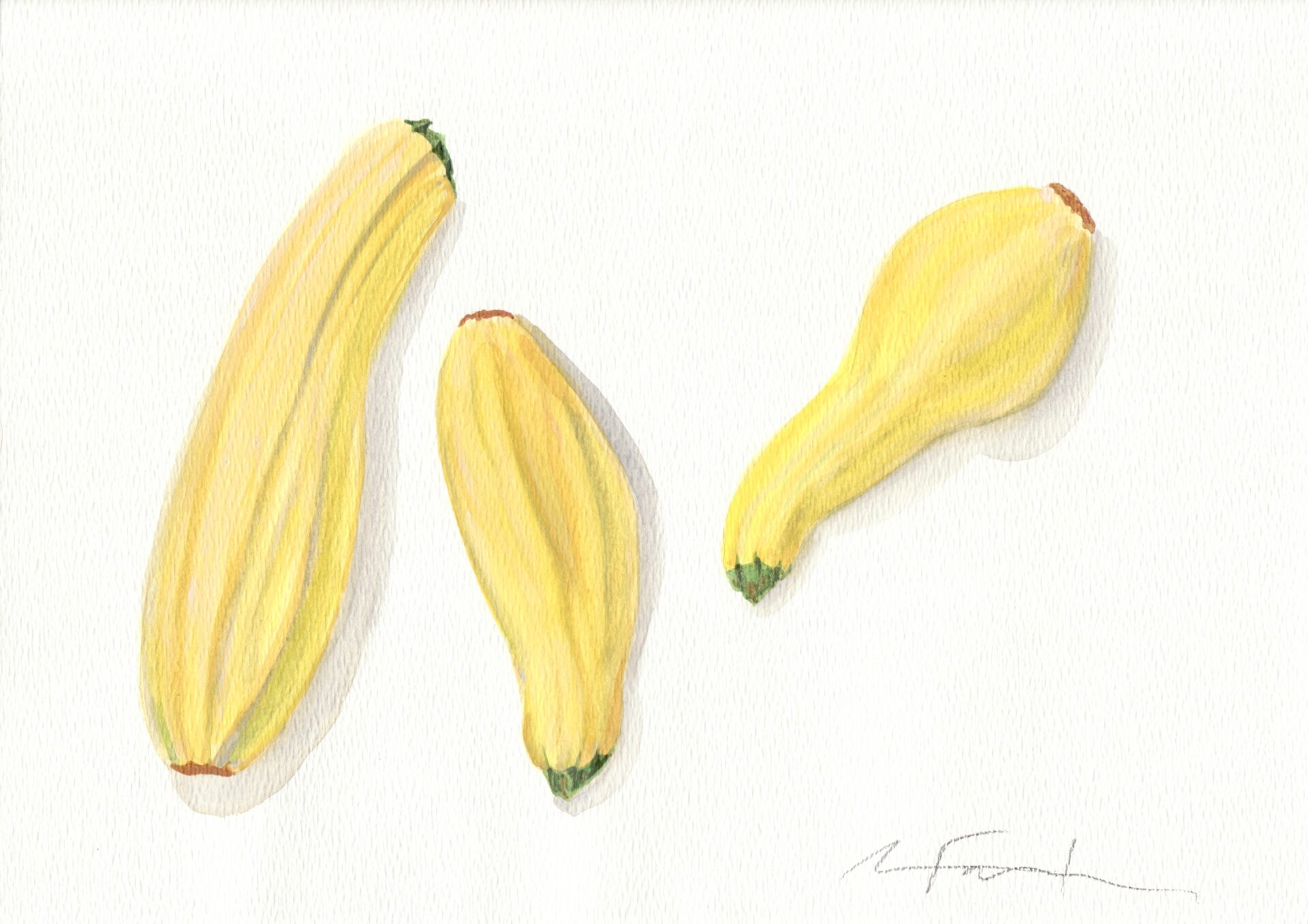 "Angela Faustina, Yellow squash watercolor study, 2016. Watercolor on paper, 12"" by 9""."