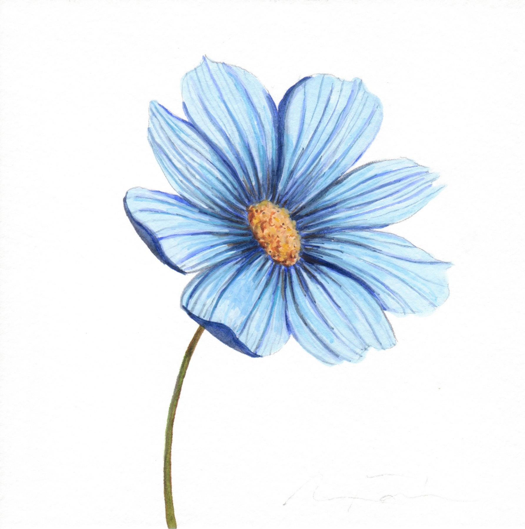 Blue Flower Watercolor Study Angela Faustina
