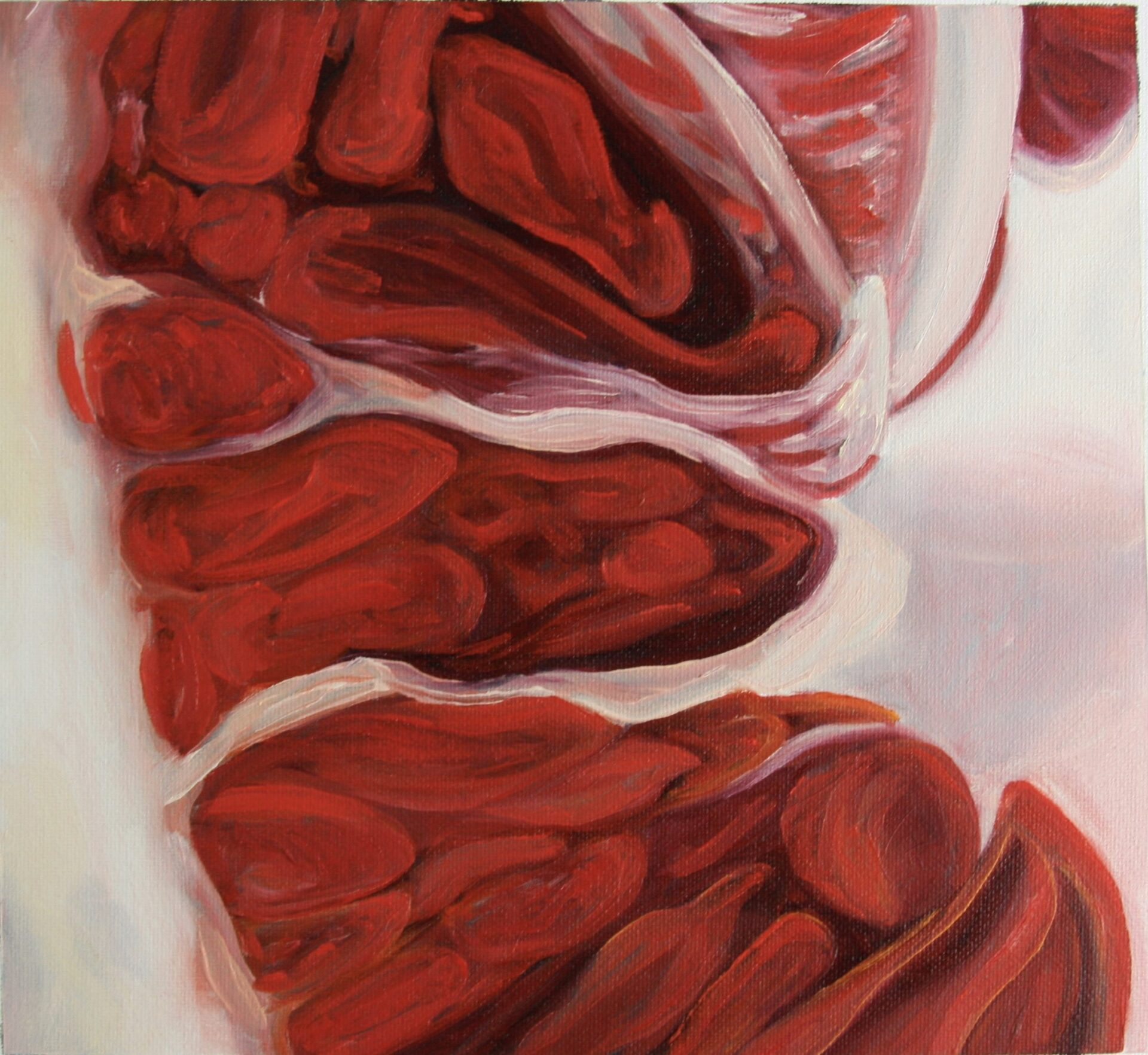 "Angela Faustina, Blood Orange study, 2015. Oil on unstretched canvas, 12"" by 12""."