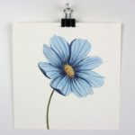 "Angela Faustina, Blue Flower study, 2015. Watercolor on paper, 6"" by 6""."
